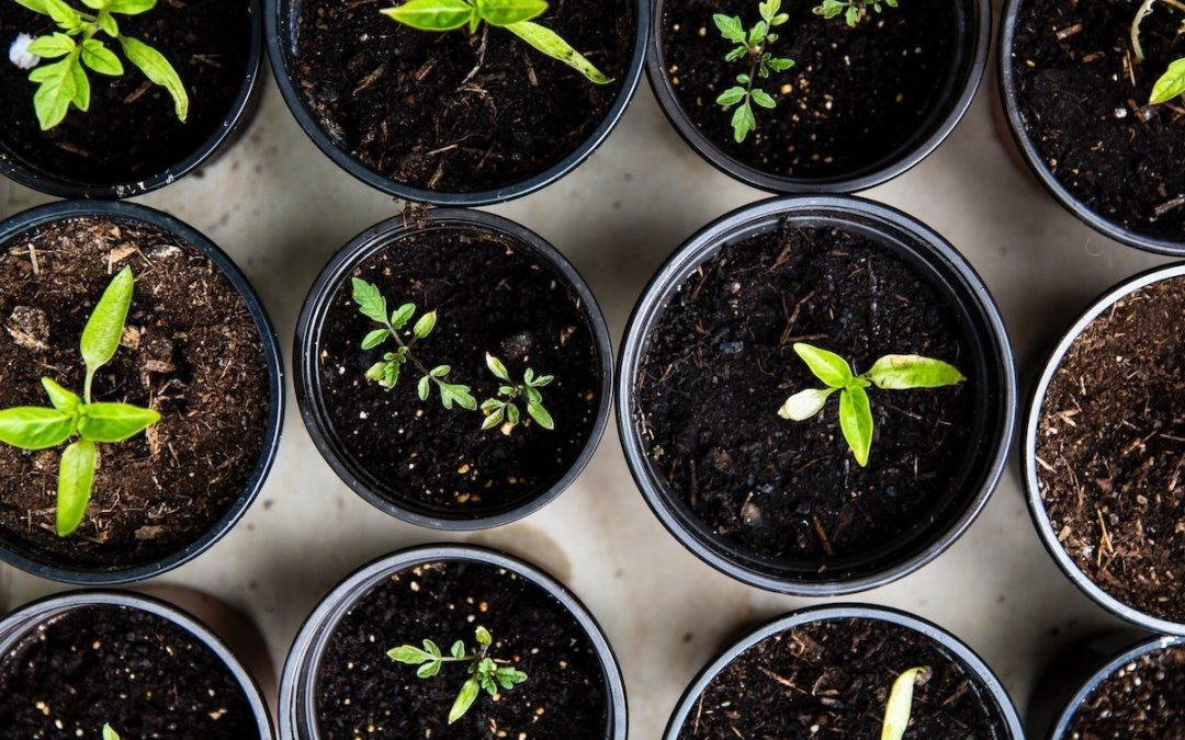7 Ways Gardening Benefits You and the Planet