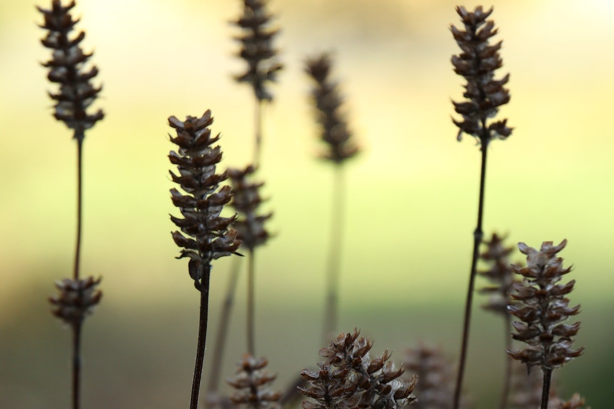wild plants at the changing of the seasons