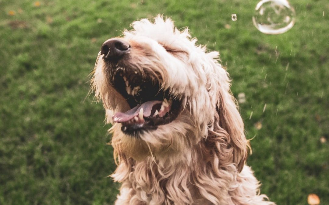 4 Spiritual Lessons You Can Learn From Your Dog