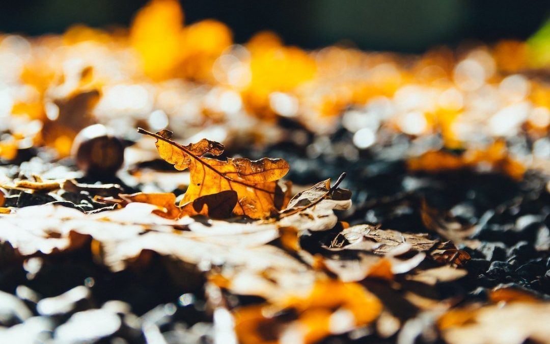 What You Don't Know About Fall Leaves
